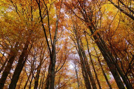 Automne-en-forêt