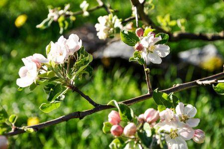Fleursprintempsreduc