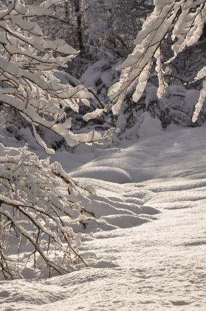 Lamontélarié hiver 2020-2