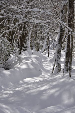 Lamontélarié hiver 2020-3