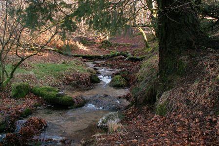 Ruisseau-en-automne